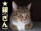 2012nekomix_cat's1