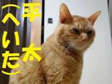 2012nekomix_cat's2